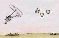 Pervane Kuşu